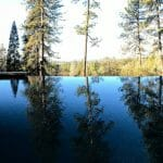 a view from the outdoor pool in the middle of the woods