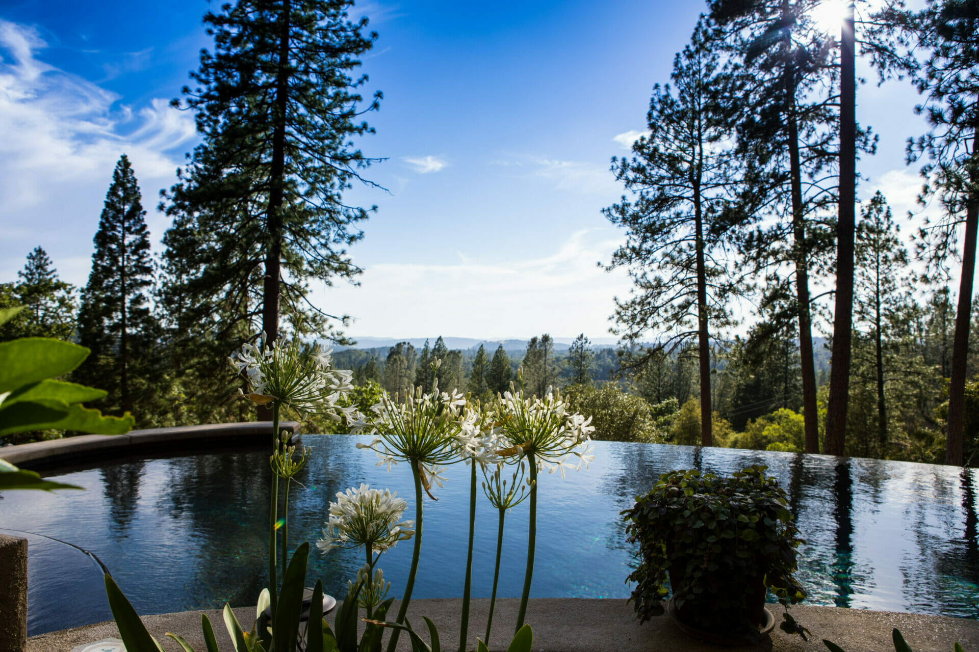 Reverie retreat pool view with the forest